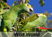 Wild World Parrot Gallery