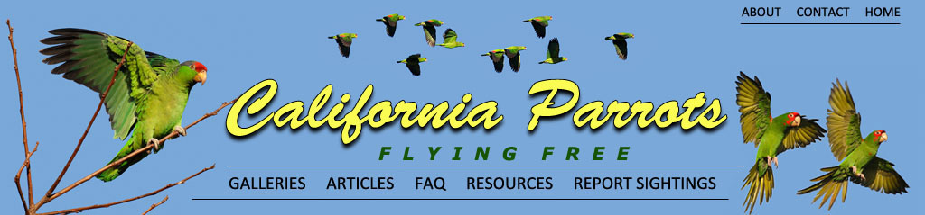 Frequenty Asked Questions about the Wild Parrots of Southern California